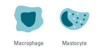 cisbio copyright, macrophages, mast cells, mastocytes, innate immune cells