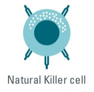 cisbio copyright, natural killer cell, innate immune cells