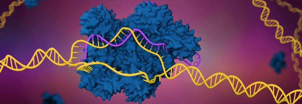CRISPR-cas9, CRISPR safety, base editors, CRISPR research