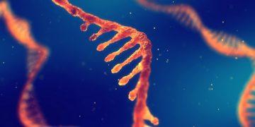 mRNA - EXPERT EU project news