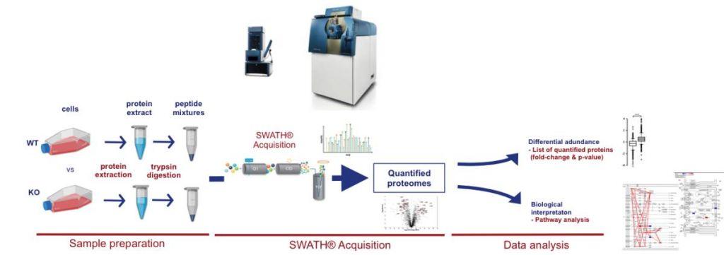 PIPPR platform, workflow, SWATH acquisition, COBO Technologies, SCIEX, proteome