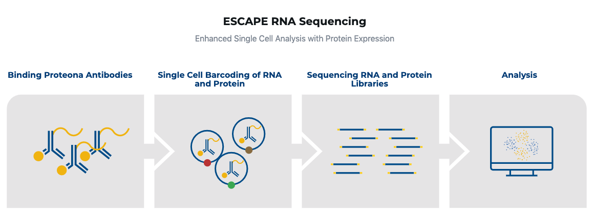 Proteona, single-cell analysis, single-cell sequencing, precision medicine, proteogenomics, proteomics