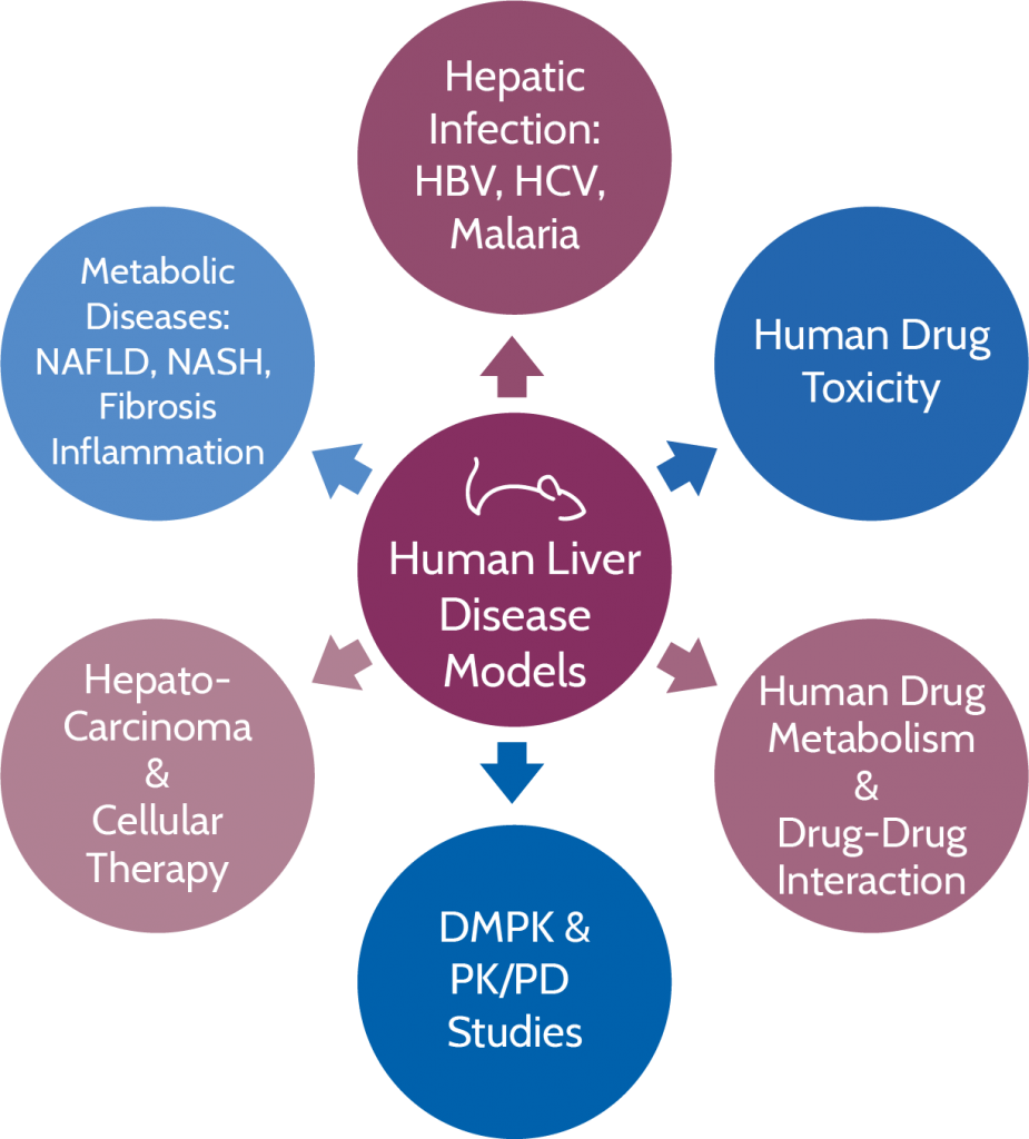 Hu-liver mouse model, humanized liver, TransCure bioServices