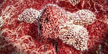 cancer immunotherapy immunos therapeutics