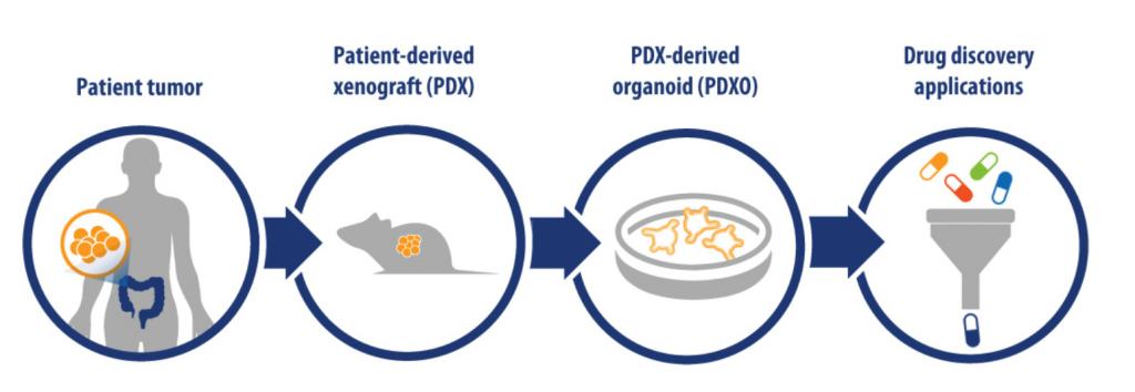 PDXO, HUB organoids, Crown Bioscience, tumor organoids