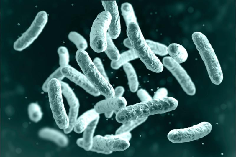 ilya pharma lactobacilli bacteria uppsala