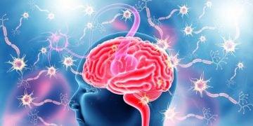 kandy therapeutics menopause treatment brain