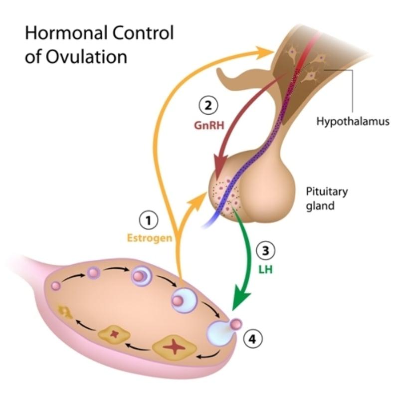 kandy therapeutics menopause treatment