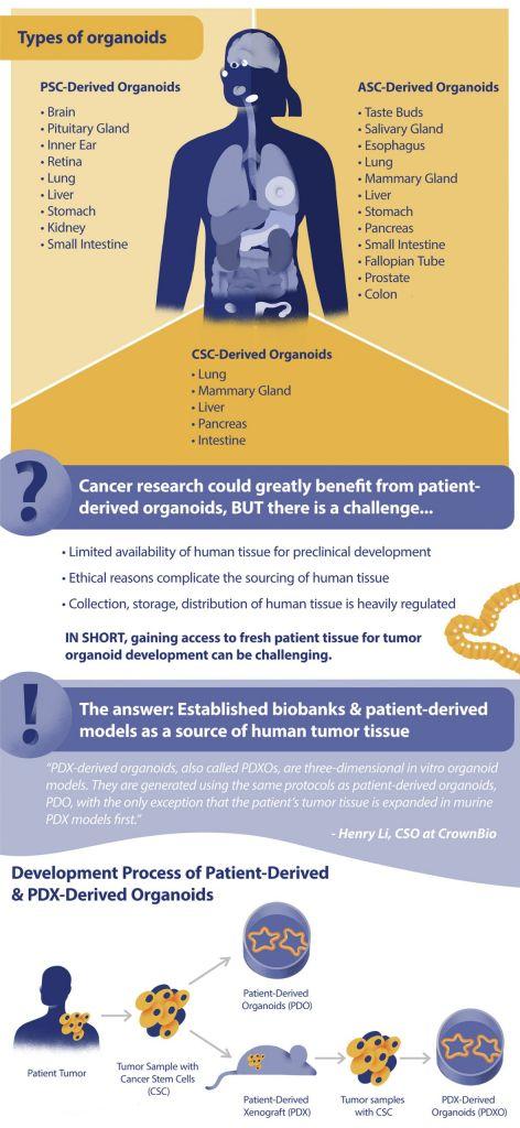 organoids, tumor organoids, cancer research