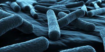 antibiotic resistance southampton e coli