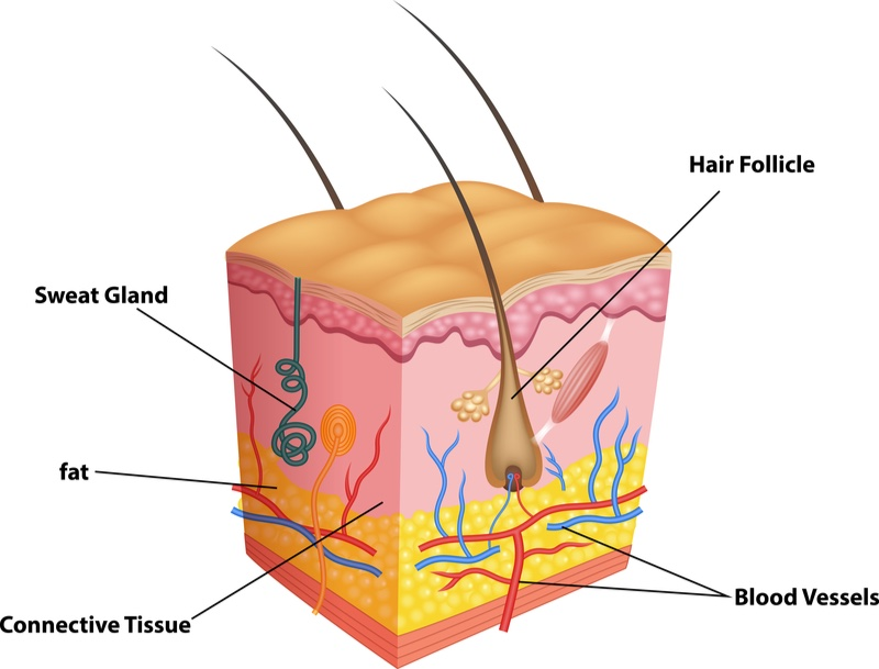 hair loss follicle hormone