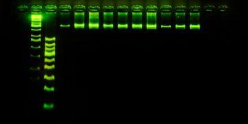 stilla technologies pcr molecular diagnostics