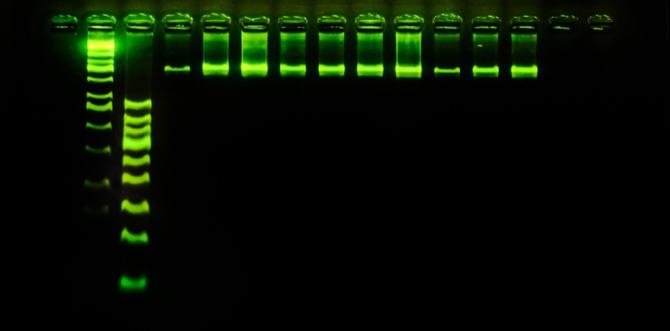 French Biotech Raises €20M to Make Precision Molecular Diagnostics