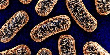 mitochondria nanna therapeutics