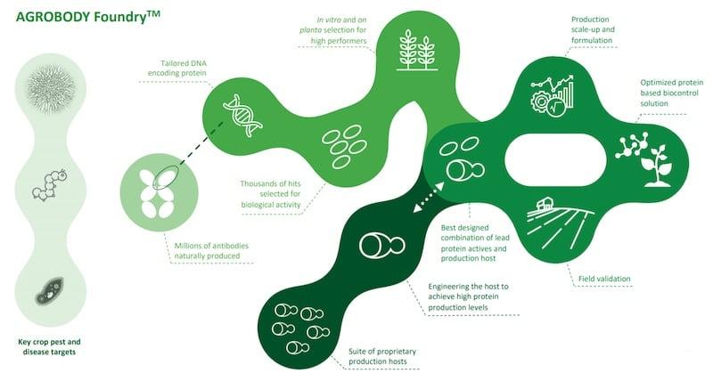 Biotalys agrobody