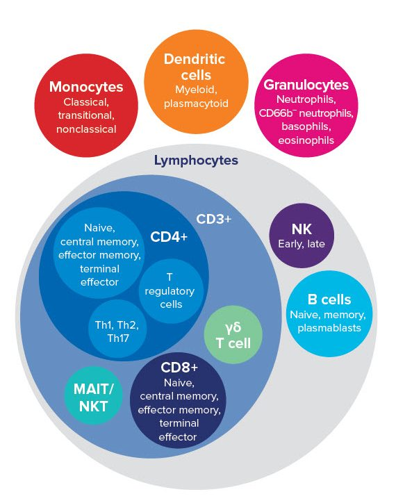 immune cells, immune system, leukocytes, T cells