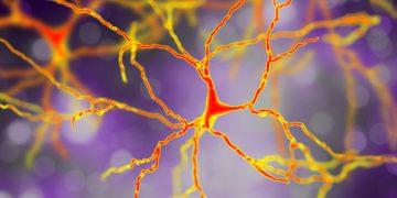 huntington's disease dementia prilenia therapeutics