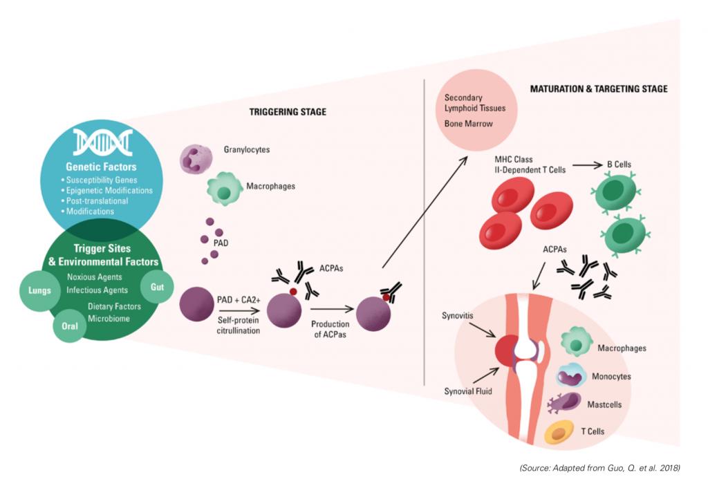 rheumatoid arthritis, autoimmune disease, immune system attack