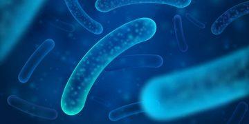 t3 pharma cancer bacteria