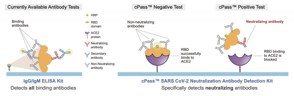cPass, neutralizing antibodies, covid-19, GenScript