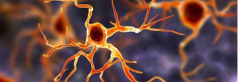 astrocytes, neurons, nervous system