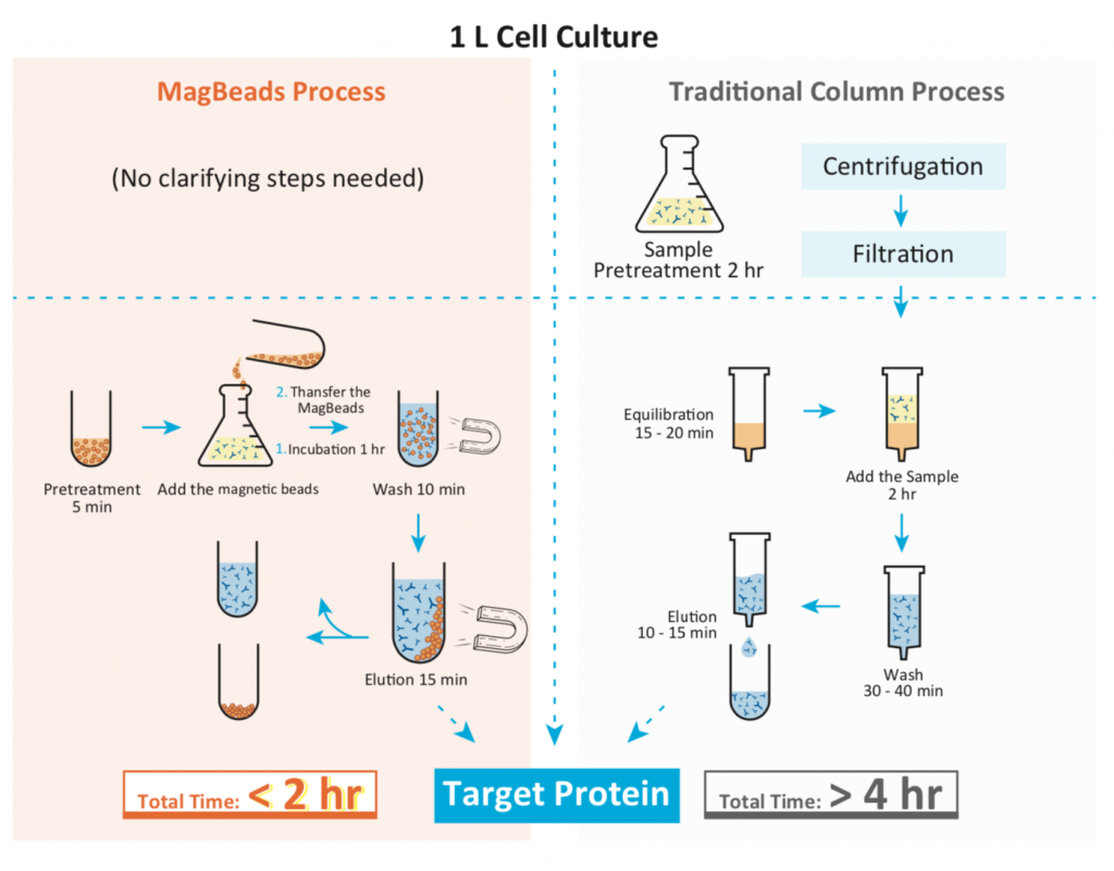 protein purification, magnetic beads, Genscript