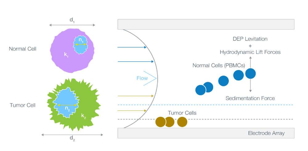ApoStream, Precision for Medicine, circulating tumor cells